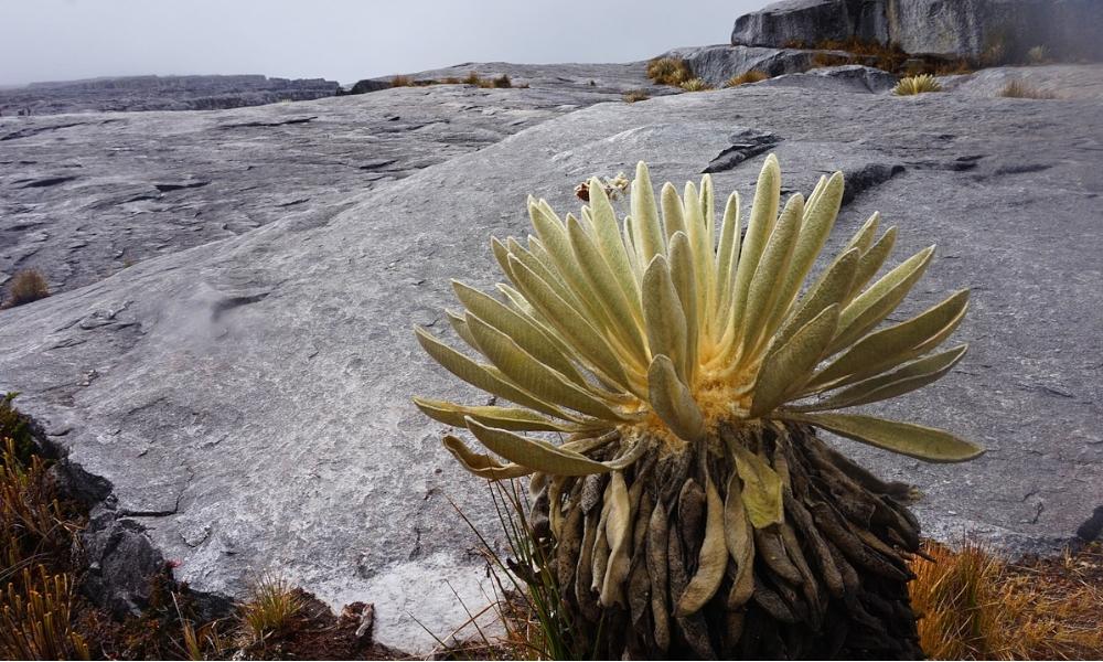 El Parque Nacional Natural el Cocuy, reluce por la inesperada tormenta de nieve a comienzos de este 2021